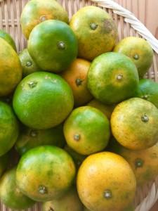 Citron Nouveau(シトロンヌーボー)企画について大切なお知らせ