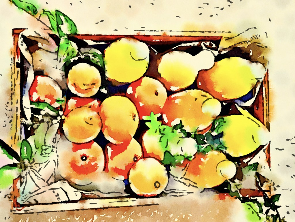 Natural Market IKO × Citron et Citron 販売会